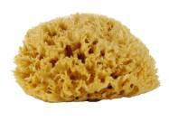 natural-sea-sponge
